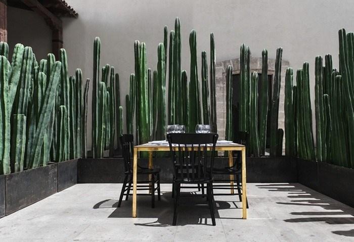 Cacti Ideas