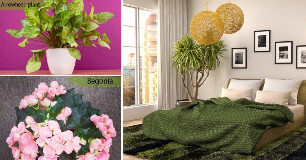 add plants in each room