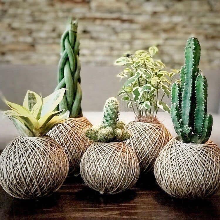 succulents ball